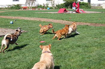 Red dog pet resort and spa pet boarding daycare magazine for Red dog daycare