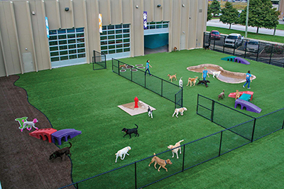 Go Play Pet Service Dog Day Care