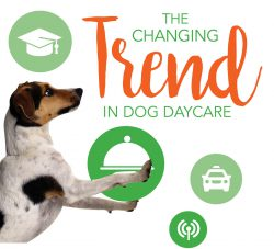 The Changing Trend in Dog Daycare