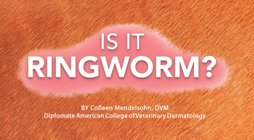 Is it Ringworm?