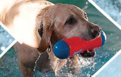 Dog Swimming Pools