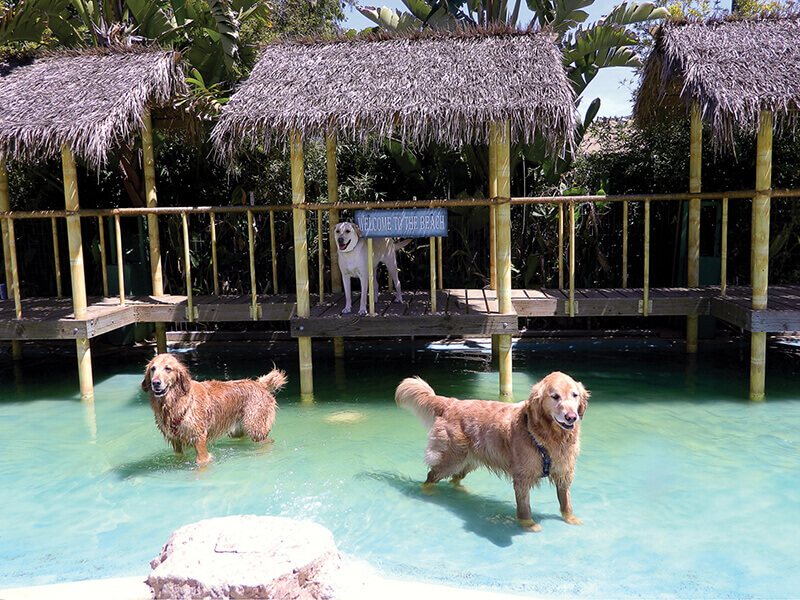 Paradise Ranch Pet Resort labrador lagoon