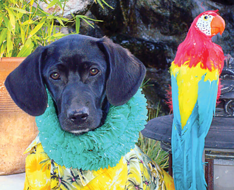Paradise Ranch Pet Resort dog in hula shirt next to parrot