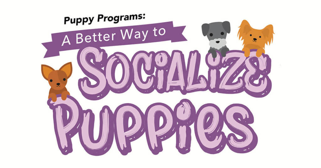 Puppy Programs: A Better Way To Socialize Puppies