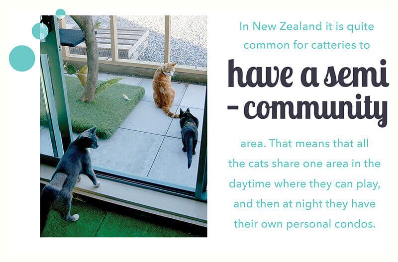 cat semi-community