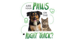 Are Your Paws On The Right Track?