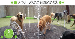 A Tail-Waggin Success: ADOGO Pet Hotels