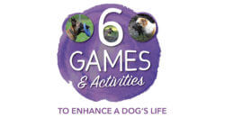 6 Games & Activities to Enhance a Dog's Life