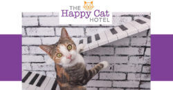 The Happy Cat Hotel