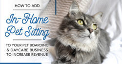 How to Add In-Home Pet Sitting to Your Pet Boarding & Daycare Business to Increase Revenue