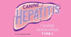 Canine Hepatitis: Canine Adenovirus Type 1