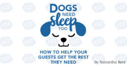 Dogs Need Sleep Too: How to Help Your Guests Get the Rest They Need