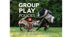 Group Play Policies to Keep Your Daycare Safe
