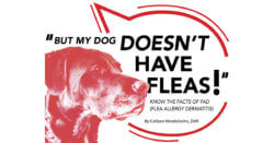 Know the Facts of FAD (Flea Allergy Dermatitis)